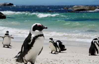 pinguino-boulders.jpg