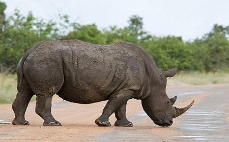 rinocerontesmueren1.jpg