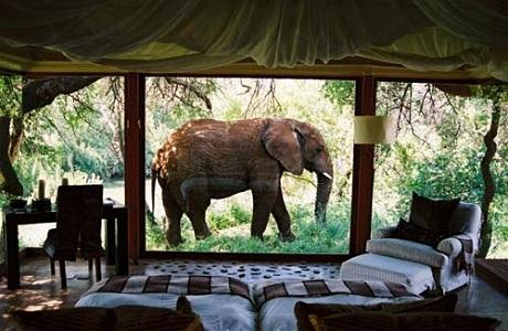 Disfruta de tus vacaciones en el Makanyane Safari Lodge