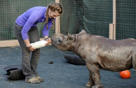 Sudáfrica inauguró el primer orfanato para rinocerontes