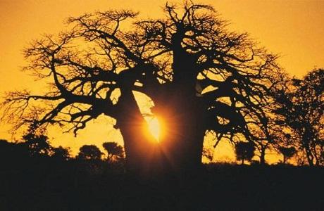 Descubriendo la provincia de Limpopo