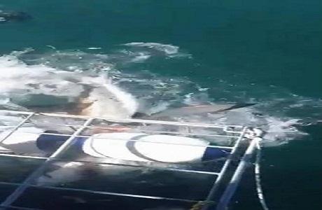 Turistas son atacados por tiburones en Sudáfrica