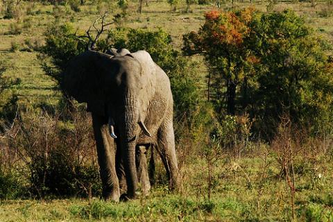 kruger-elefante.jpg