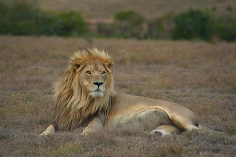 leon-africa.jpg